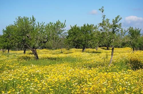 Mallorca im März vorgestellt von Marcel Remus Real Estate