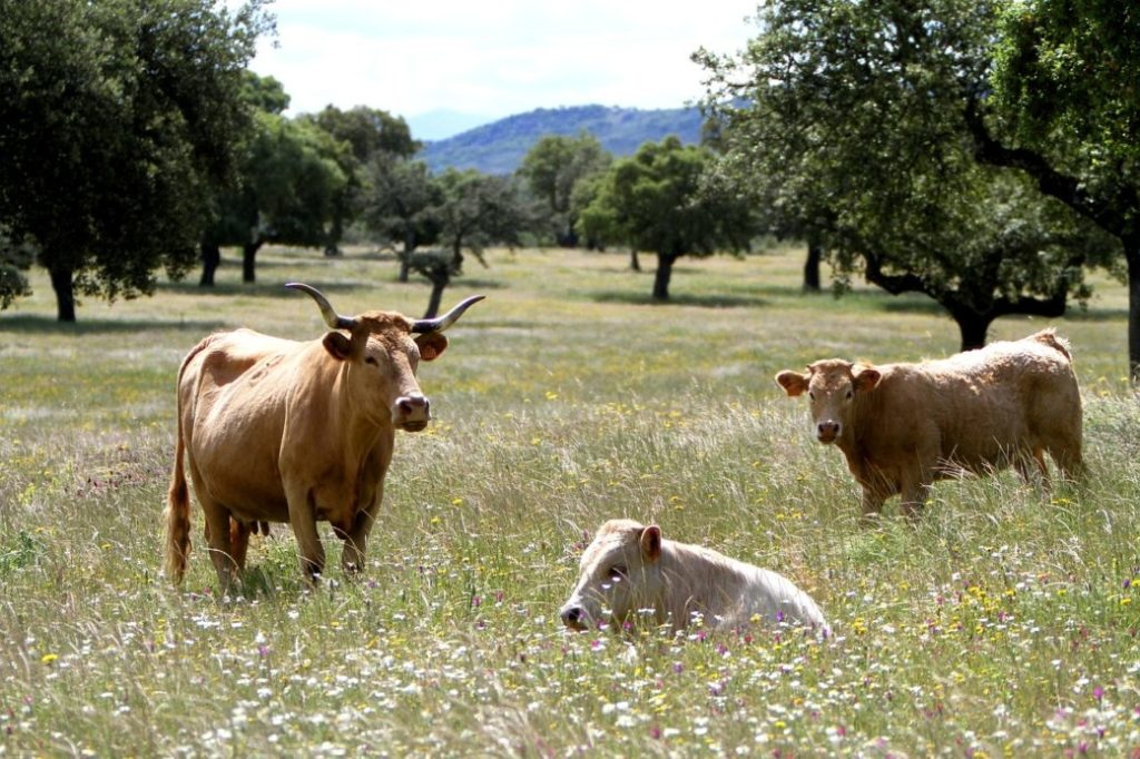 Das Klima auf Mallorca im Frühling