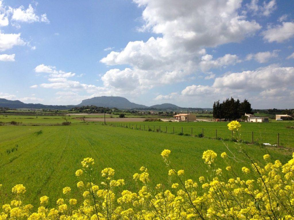 Mallorca im März Frühling